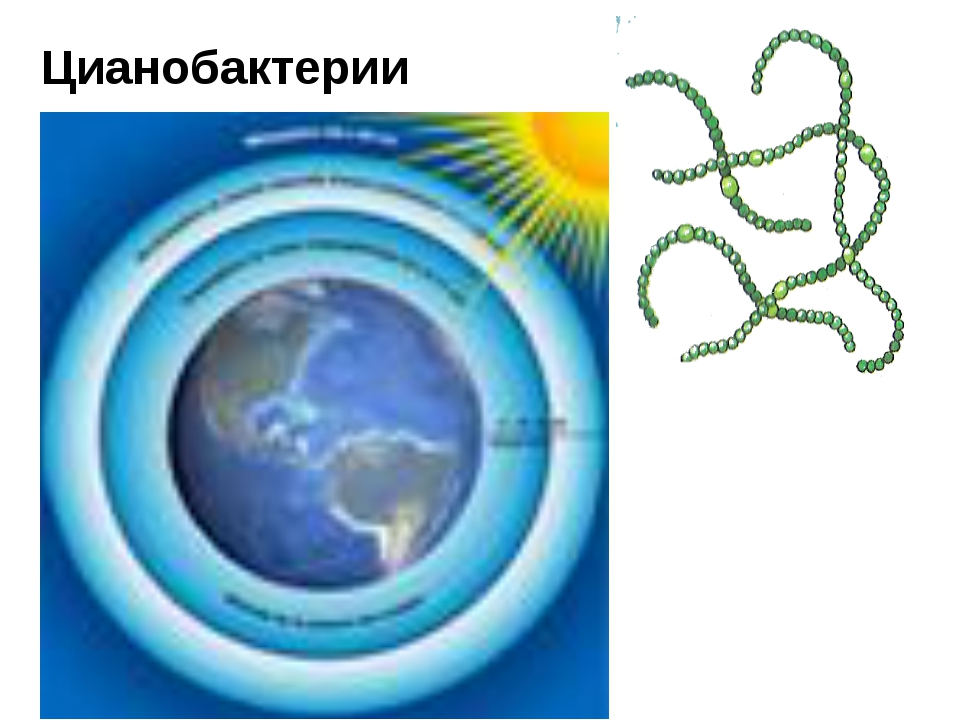 Цианобактерии