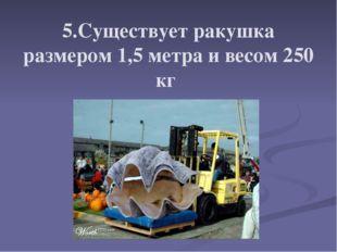 5.Существует ракушка размером 1,5 метра и весом 250 кг