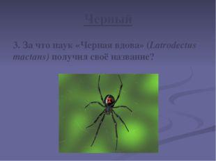 Черный 3. За что паук «Черная вдова» (Latrodectus mactans) получил своё назва