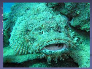 Эта рыба распространена в тропических водах Тихого и Индийского океанов, от К