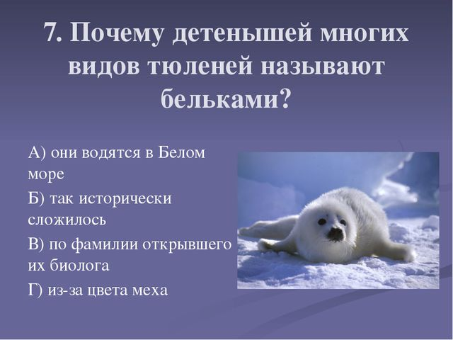 7. Почему детенышей многих видов тюленей называют бельками? А) они водятся в...