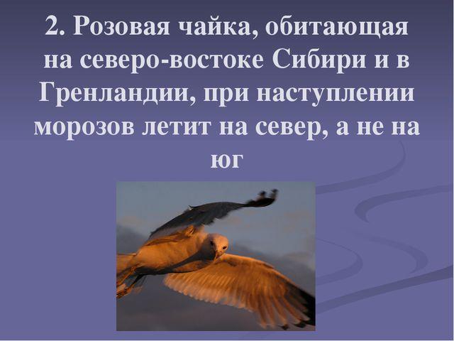 2. Розовая чайка, обитающая на северо-востоке Сибири и в Гренландии, при наст...