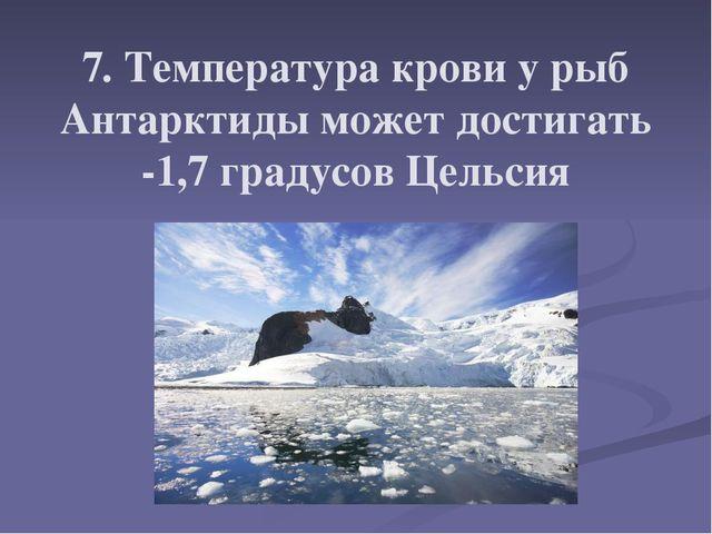 7. Температура крови у рыб Антарктиды может достигать -1,7 градусов Цельсия
