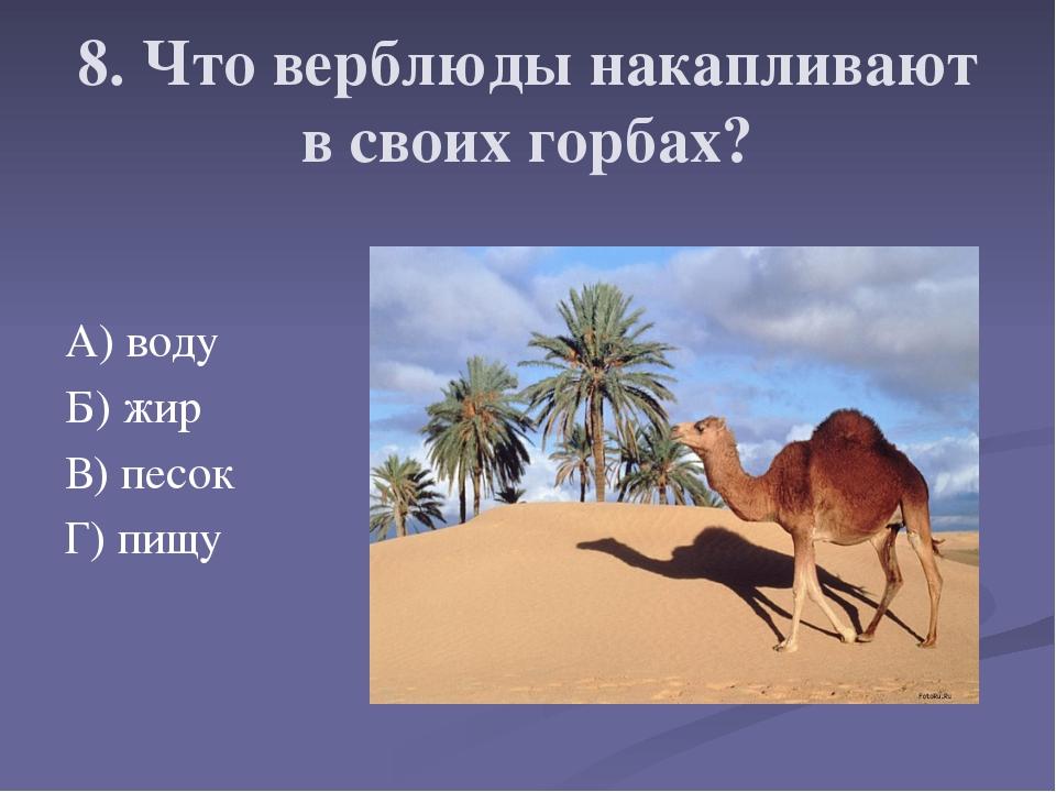 8. Что верблюды накапливают в своих горбах? А) воду Б) жир В) песок Г) пищу