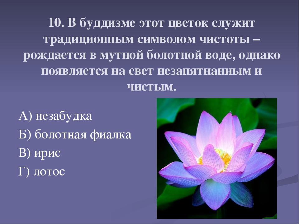10. В буддизме этот цветок служит традиционным символом чистоты – рождается в...