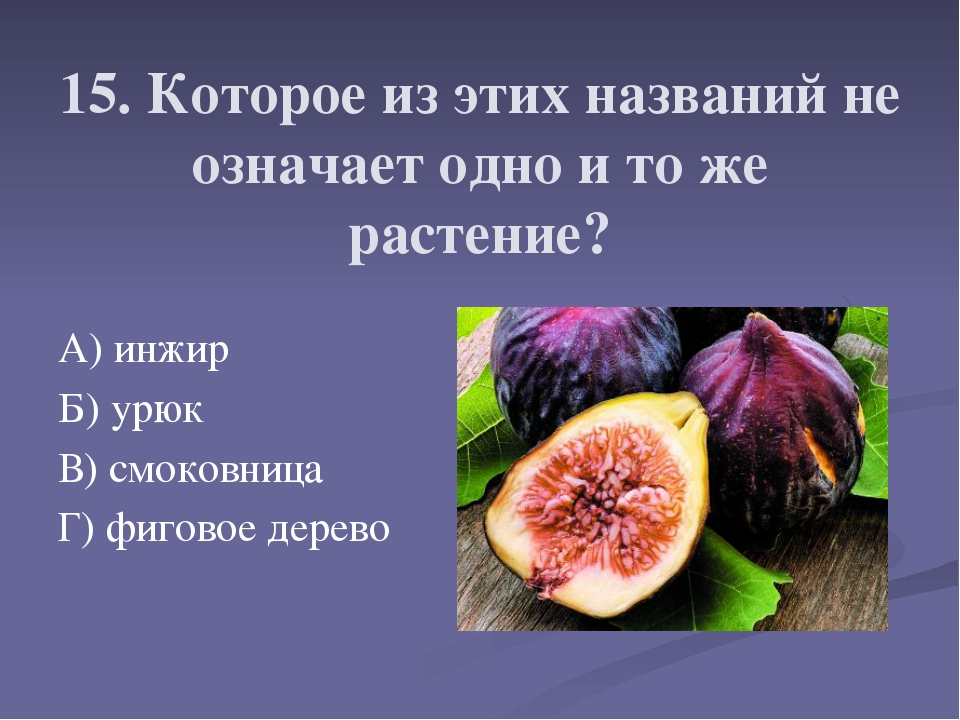15. Которое из этих названий не означает одно и то же растение? А) инжир Б) у...