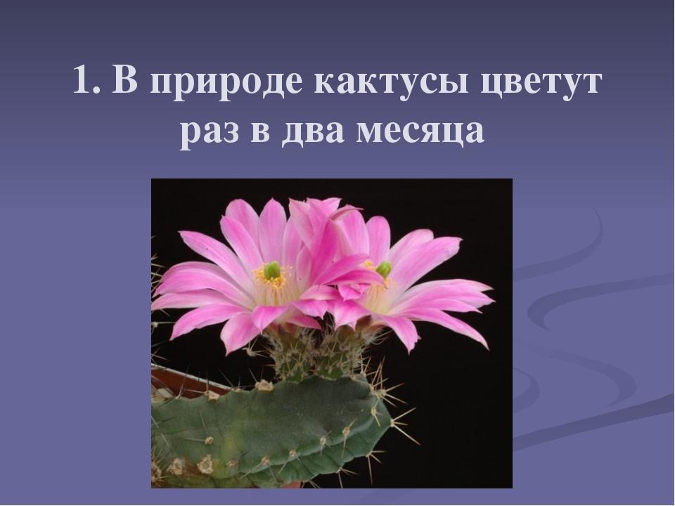 1. В природе кактусы цветут раз в два месяца