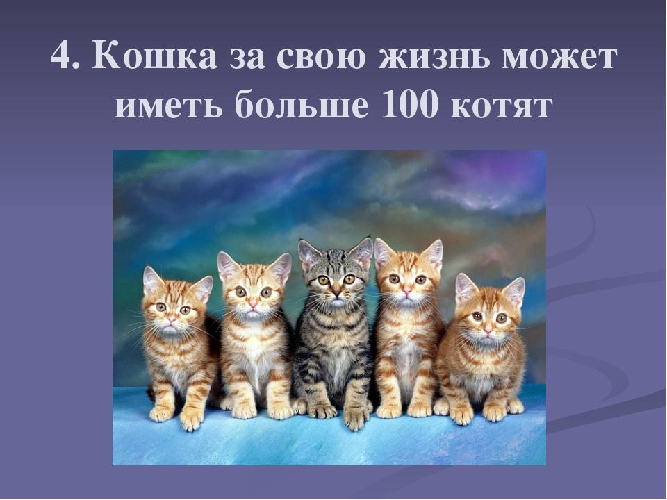 4. Кошка за свою жизнь может иметь больше 100 котят