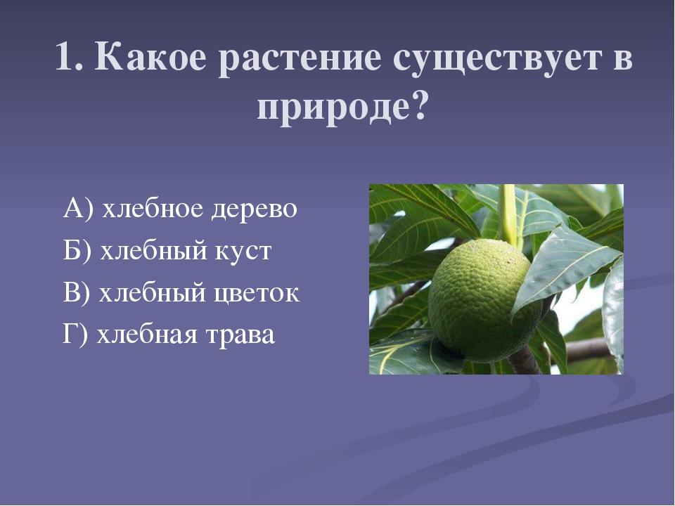 1. Какое растение существует в природе? А) хлебное дерево Б) хлебный куст В)...