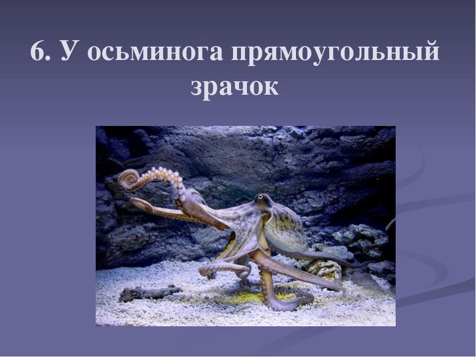 6. У осьминога прямоугольный зрачок