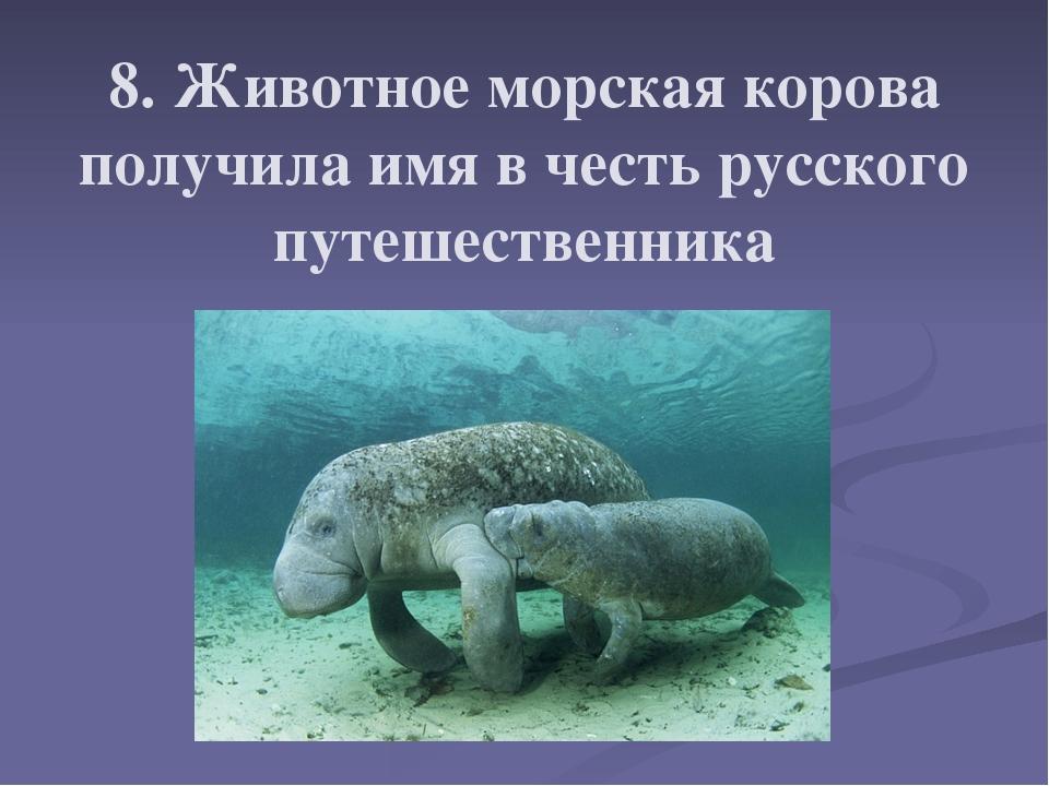 8. Животное морская корова получила имя в честь русского путешественника