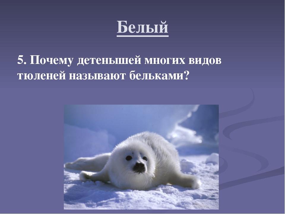 Белый 5. Почему детенышей многих видов тюленей называют бельками?