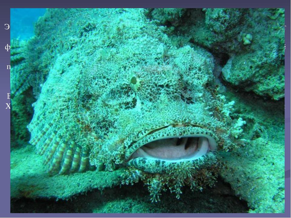 Эта рыба распространена в тропических водах Тихого и Индийского океанов, от К...