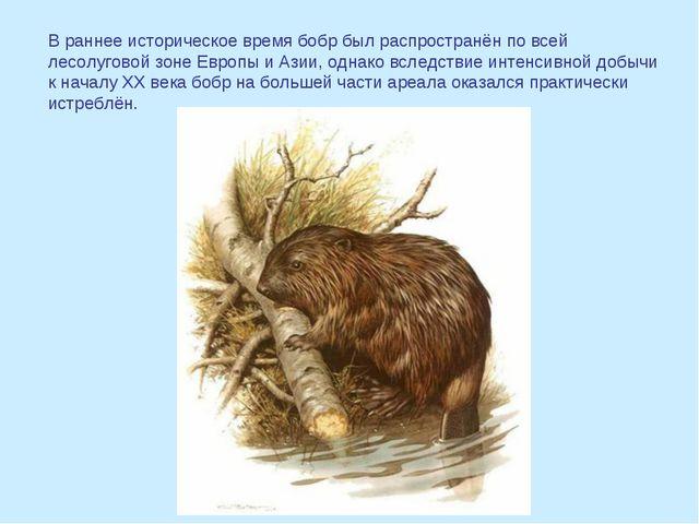 В раннее историческое время бобр был распространён по всей лесолуговой зоне Е...