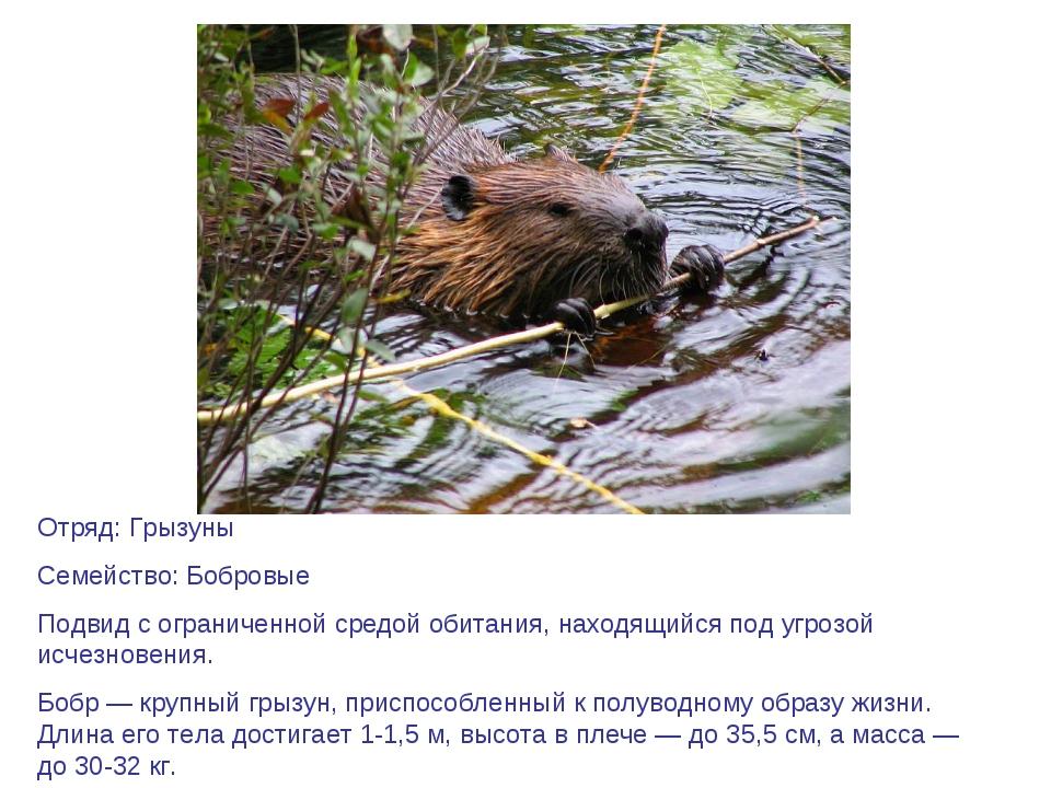 Отряд: Грызуны Семейство: Бобровые Подвид с ограниченной средой обитания, нах...