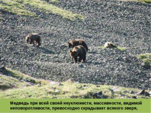 Медведь при всей своей неуклюжести, массивности, видимой неповоротливости, пр