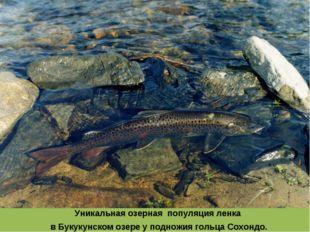 Уникальная озерная популяция ленка в Букукунском озере у подножия гольца Сохо