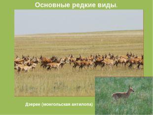 Дзерен (монгольская антилопа) Основные редкие виды.