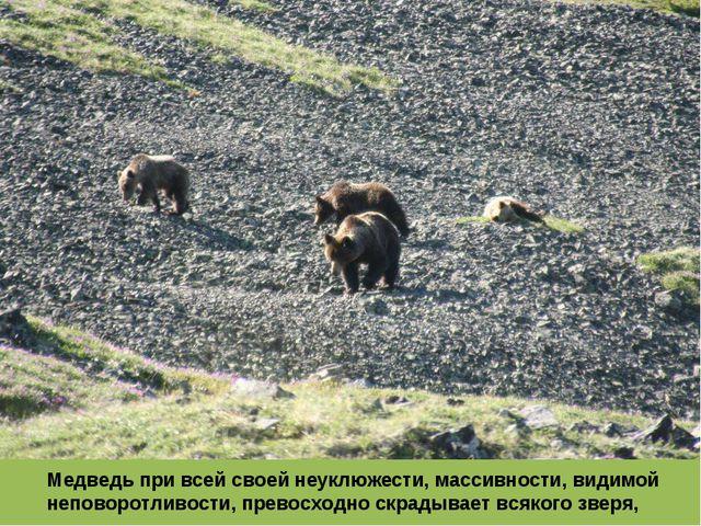 Медведь при всей своей неуклюжести, массивности, видимой неповоротливости, пр...