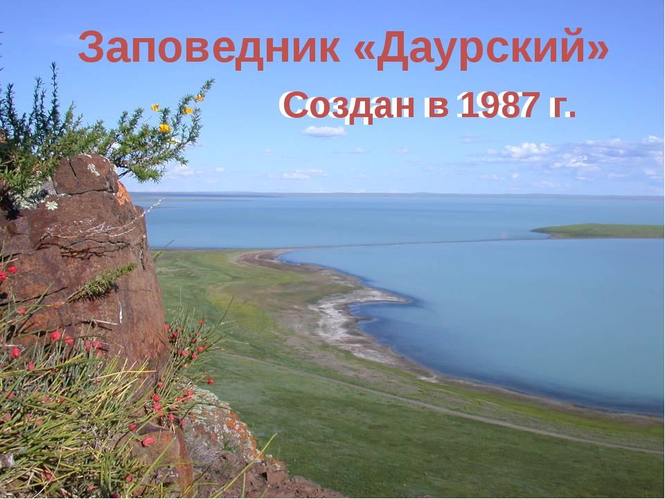 Заповедник «Даурский» Создан в 1987 г. Создан в 1987 г.
