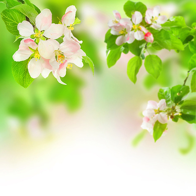 Скачать Spring leaves and flowers - UHQ Stock Photo