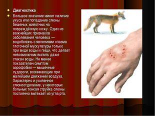 Диагностика Большое значение имеет наличие укуса или попадание слюны бешеных