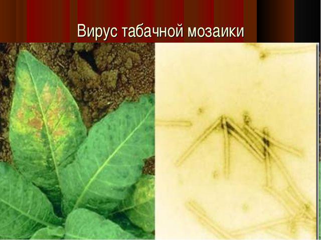 Вирус табачной мозаики