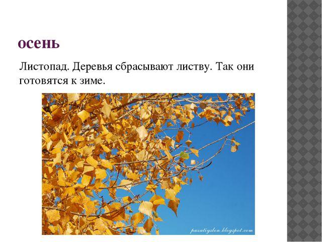 осень Листопад. Деревья сбрасывают листву. Так они готовятся к зиме.