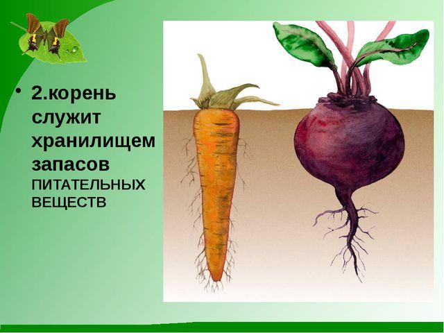 2.корень служит хранилищем запасов ПИТАТЕЛЬНЫХ ВЕЩЕСТВ