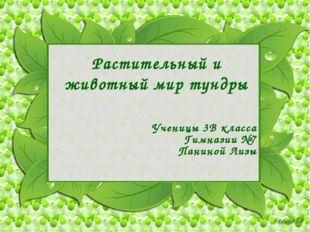 Растительный и животный мир тундры Ученицы 3В класса Гимназии №7 Паниной Лизы