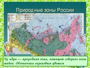 Ту́ндра — природная зона, лежащая севернее зоны тайги. Обозначена сиреневым ц