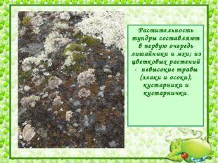 Растительность тундры составляют в первую очередь лишайники и мхи; из цветков