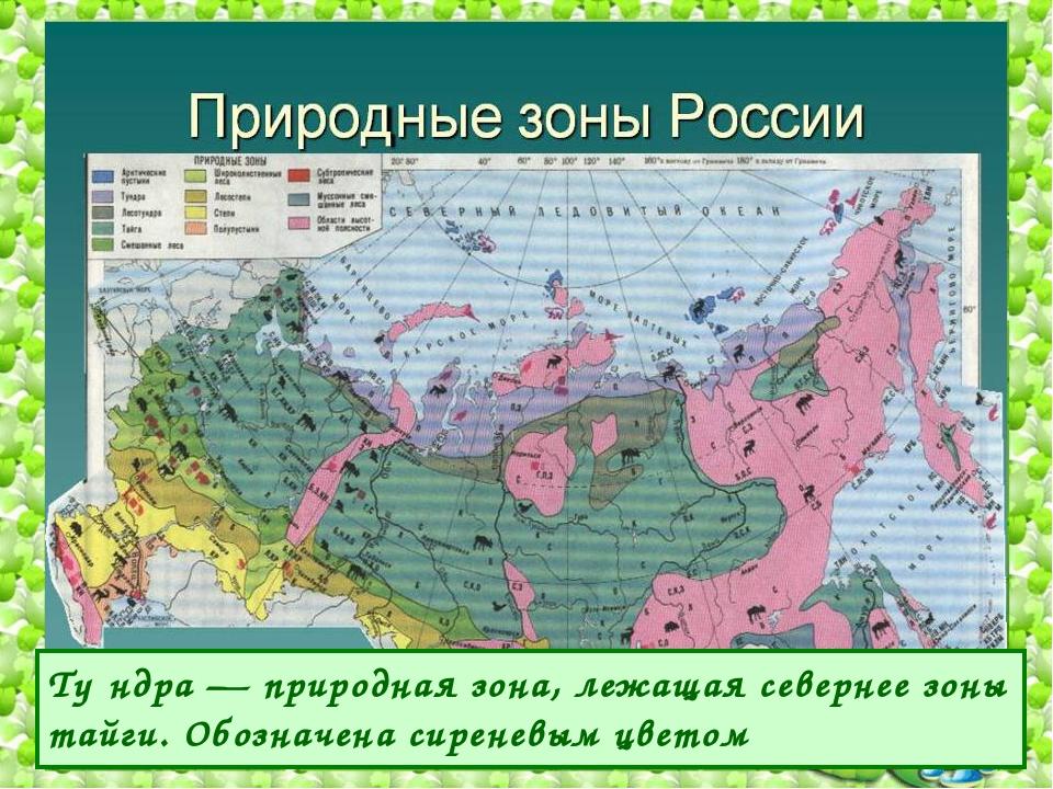 Ту́ндра — природная зона, лежащая севернее зоны тайги. Обозначена сиреневым ц...