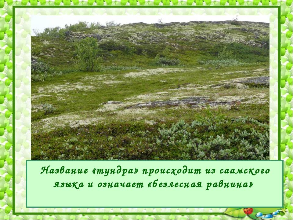 Название «тундра» происходит из саамского языка и означает «безлесная равнина»