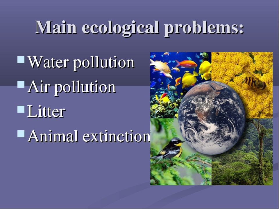 Main ecological problems: Water pollution Air pollution Litter Animal extinct...