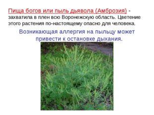 Пища богов или пыль дьявола (Амброзия) - захватила в плен всю Воронежскую обл