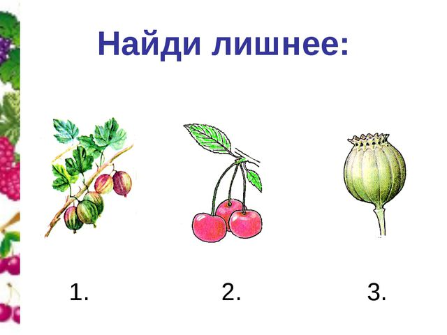 Найди лишнее: 1. 2. 3.