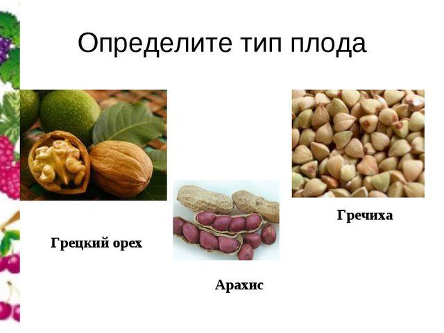 Определите тип плода Грецкий орех Арахис Гречиха