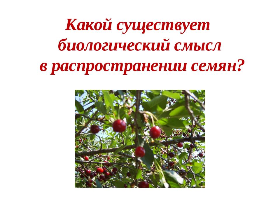 Какой существует биологический смысл в распространении семян?