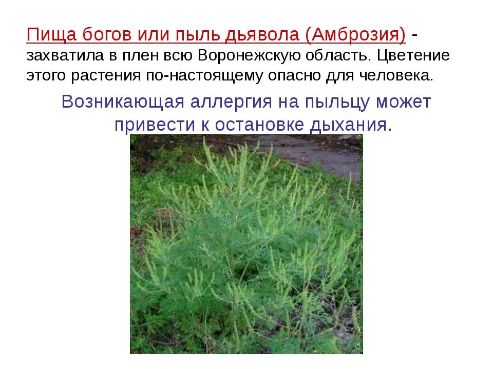 Пища богов или пыль дьявола (Амброзия) - захватила в плен всю Воронежскую обл...