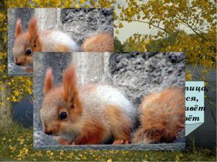 Не мышь, не птица, в лесу резвится, На деревьях живёт и орешки грызёт