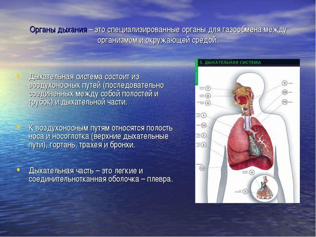 Органы дыхания – это специализированные органы для газообмена между организмо...