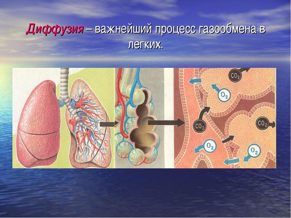 Диффузия – важнейший процесс газообмена в легких.