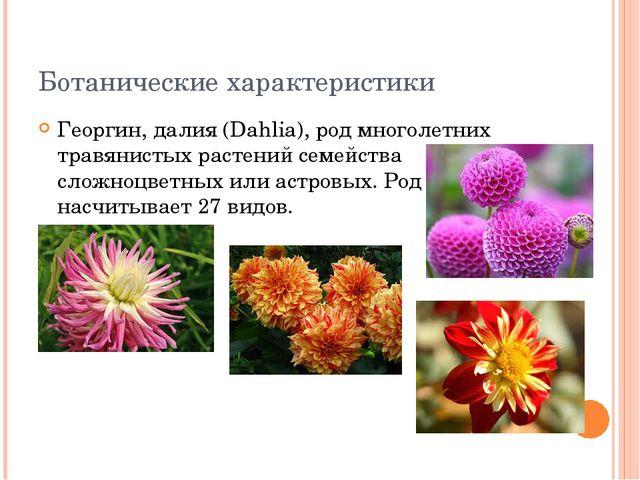Ботанические характеристики Георгин, далия (Dahlia), род многолетних травянис...