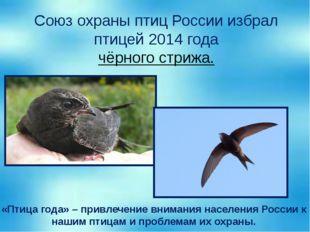 Союз охраны птиц России избрал птицей 2014 года чёрного стрижа. «Птица года»