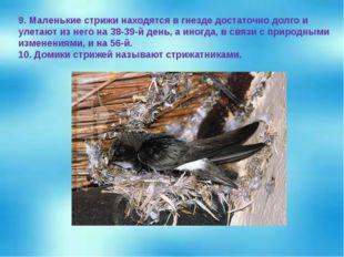 9. Маленькие стрижи находятся в гнезде достаточно долго и улетают из него на