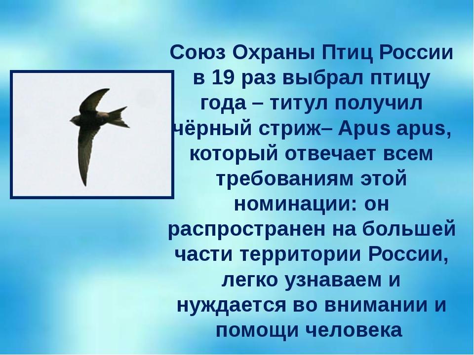 Союз Охраны Птиц России в 19 раз выбрал птицу года – титул получил чёрный стр...