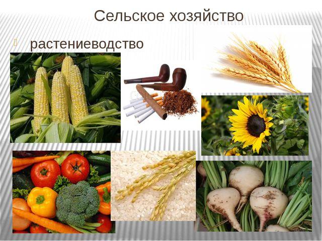 Сельское хозяйство растениеводство