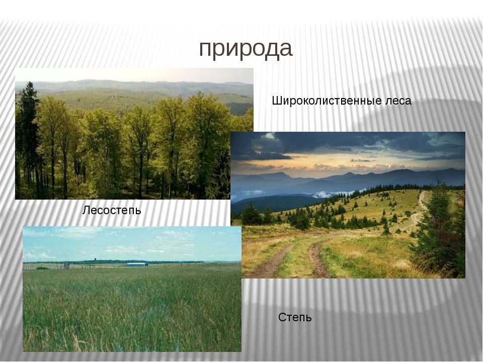 природа Лесостепь Широколиственные леса Степь