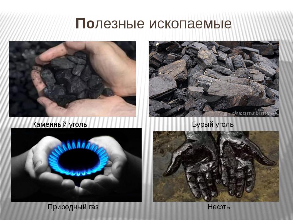Полезные ископаемые Нефть Бурый уголь Природный газ Каменный уголь